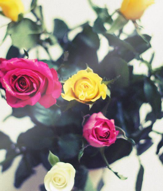 rosesred.jpg