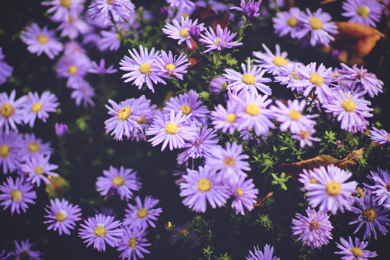 blomster@2x