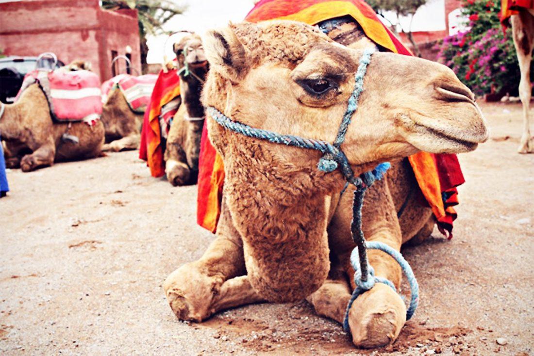 kameltur-marrakech@2x.jpg