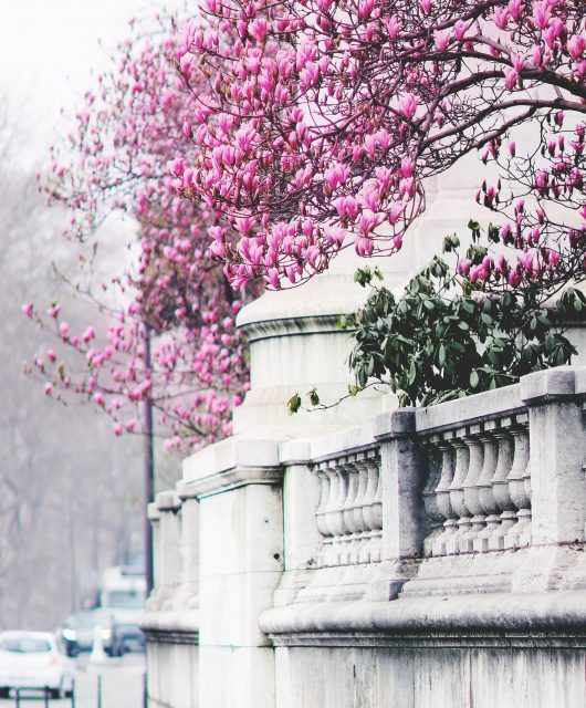 magnolia@2x2.jpg
