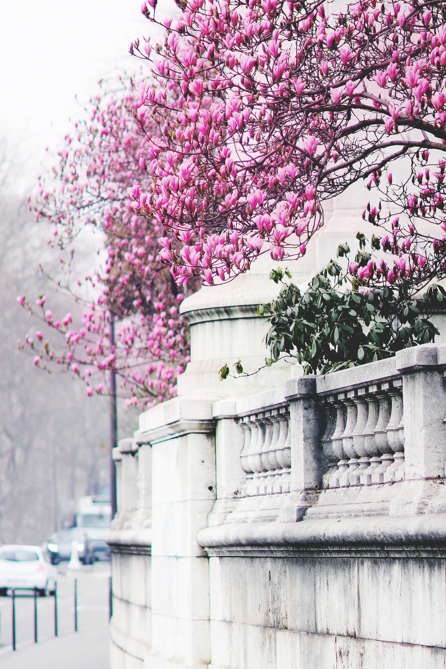 magnolia@2x