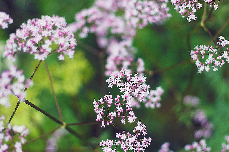 Lyserøde-blomster@2x