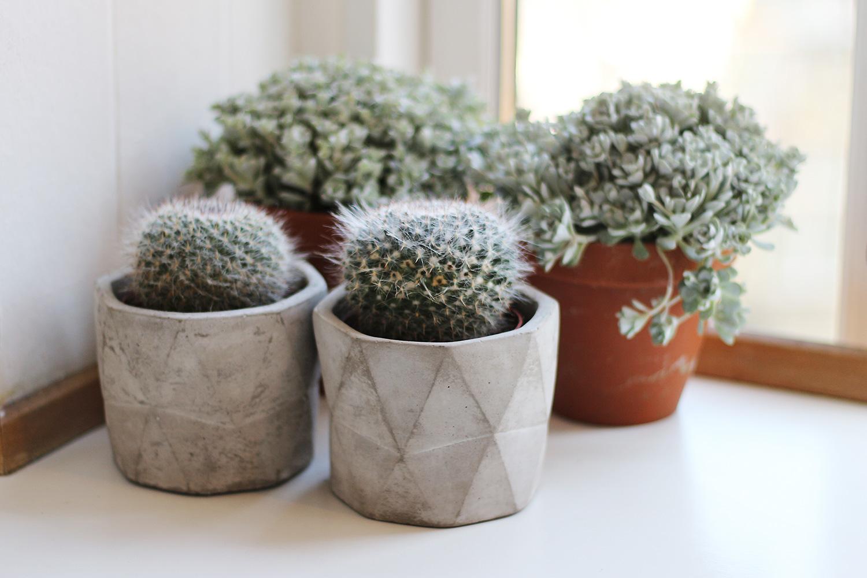 kaktus@2x