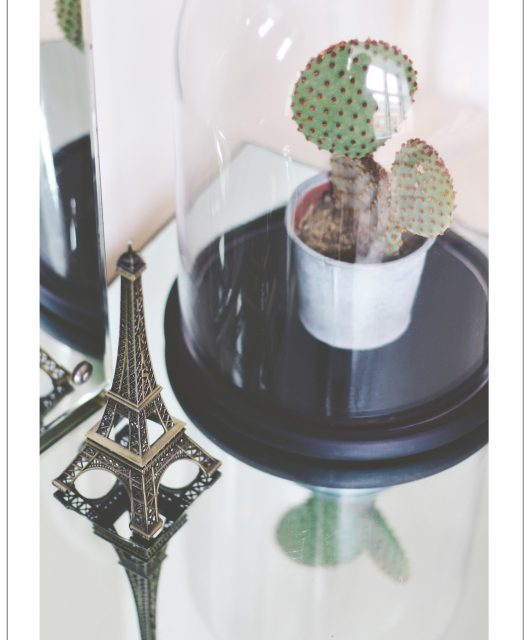 cool-cactus.jpg