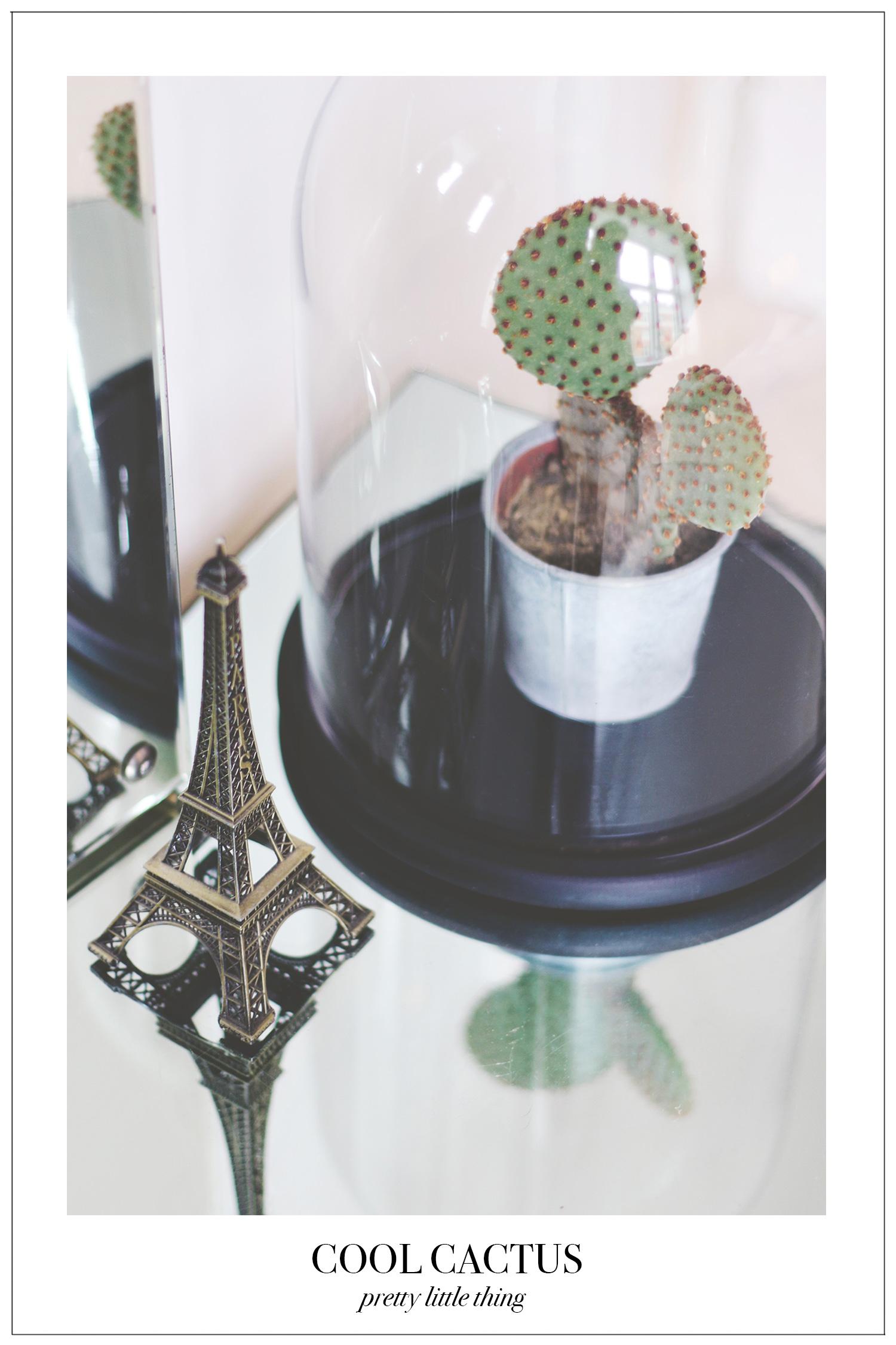 cool-cactus