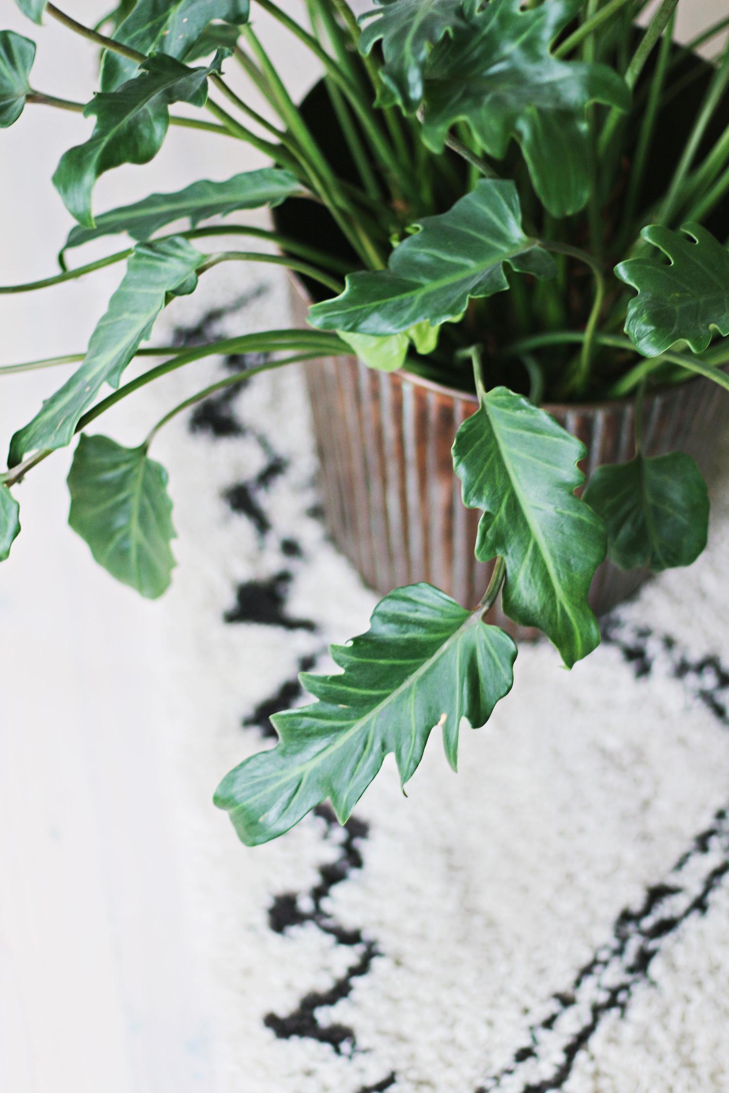 grøn-plante
