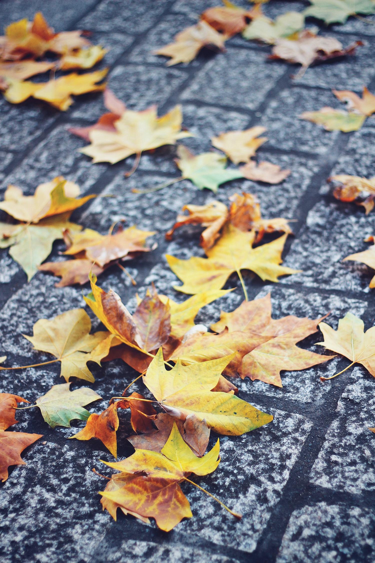 gule-efterårsblade