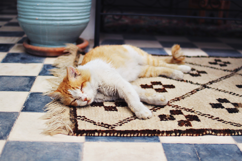 søvnig-kat.jpg