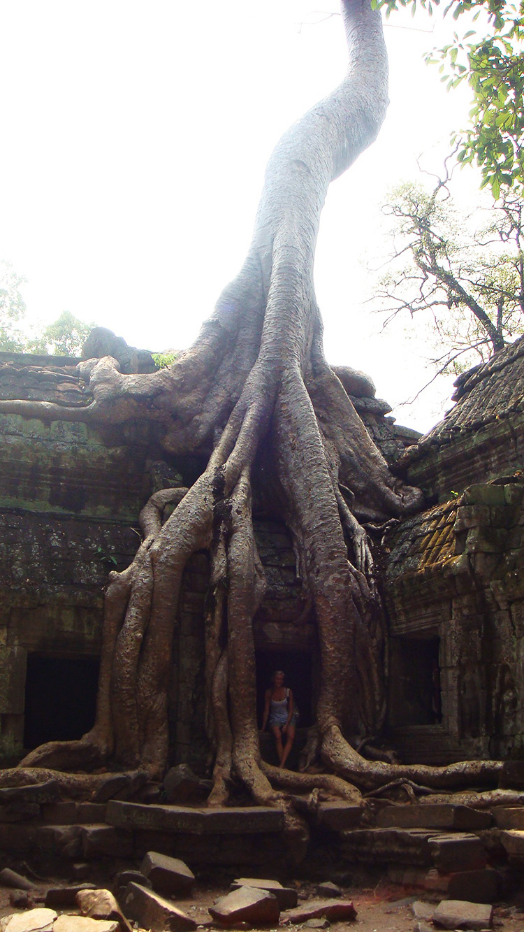 kæmpe-træ-angkor-wat