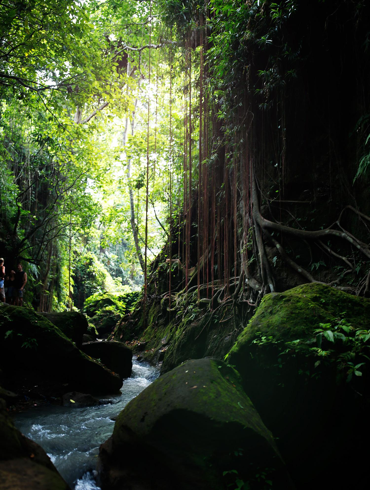 fortryllet-skov