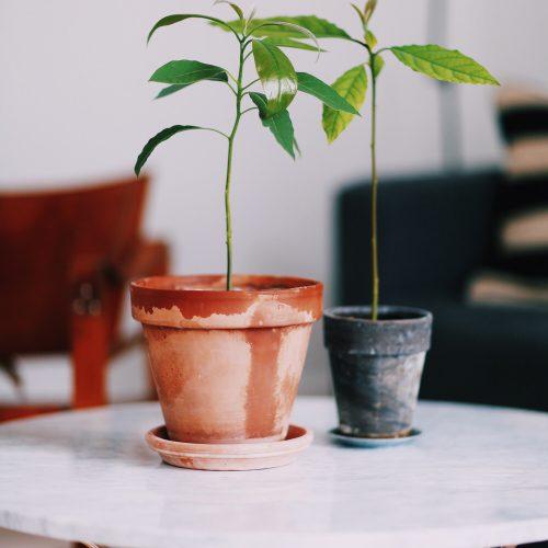avocado-planter.jpg