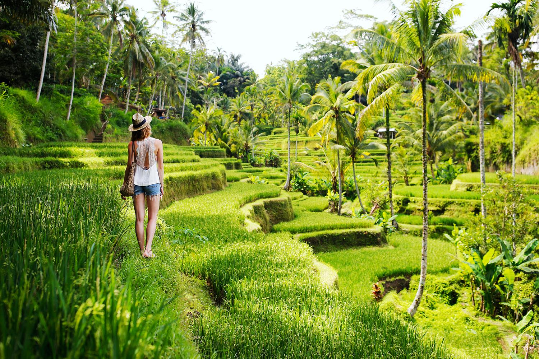 ubud-rice-fields