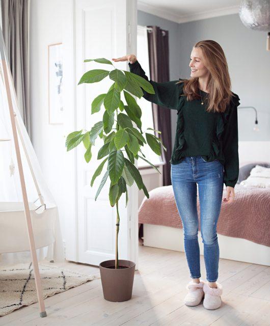 avocado-tree-diy