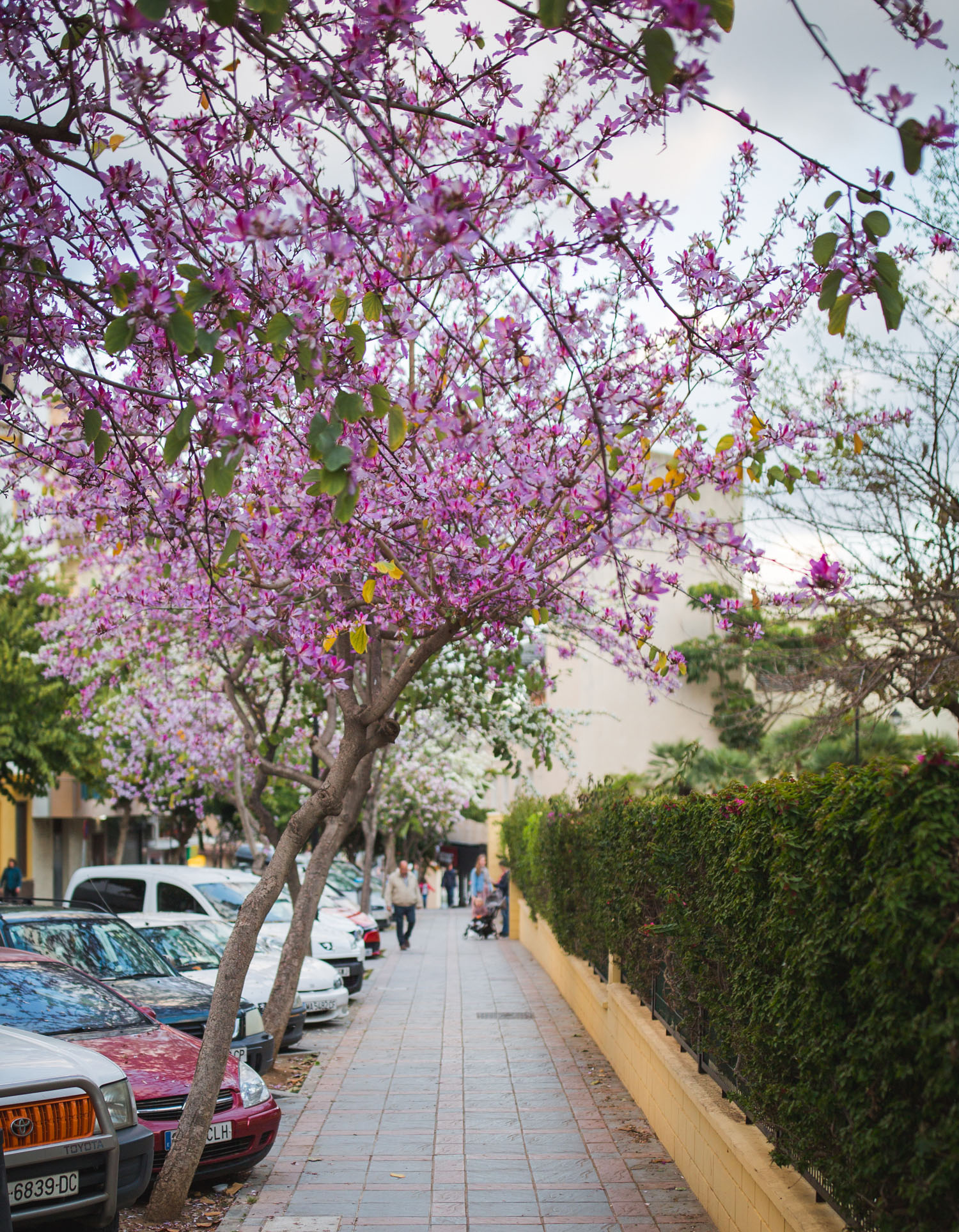 spring-marbella